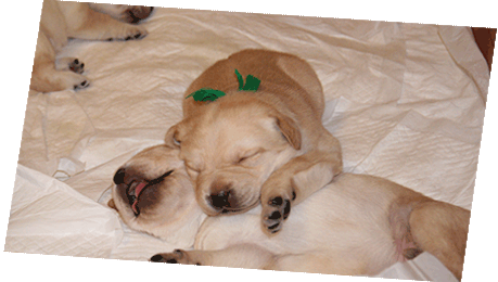 犬やネコ、ワン子といったペット業界に強い印刷会社
